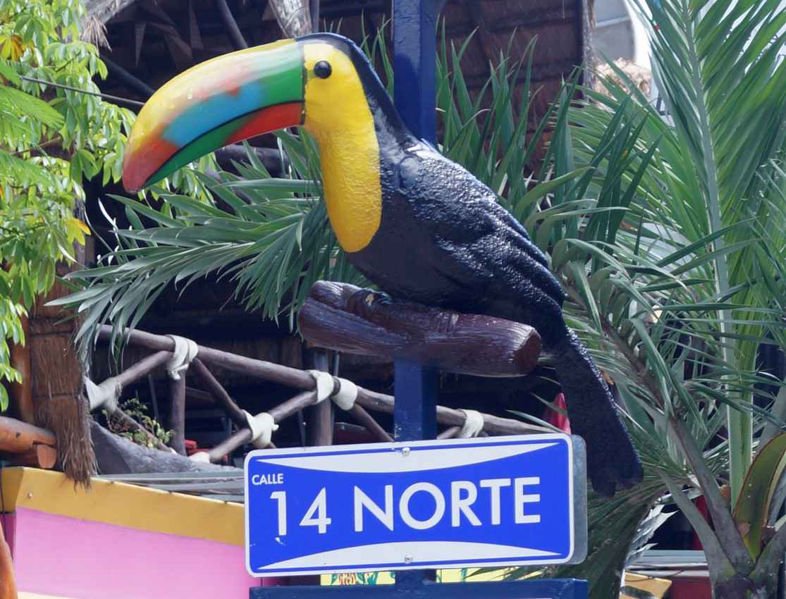 A large tropical bird that is on top of a street sign post in Playa Del Carmen.