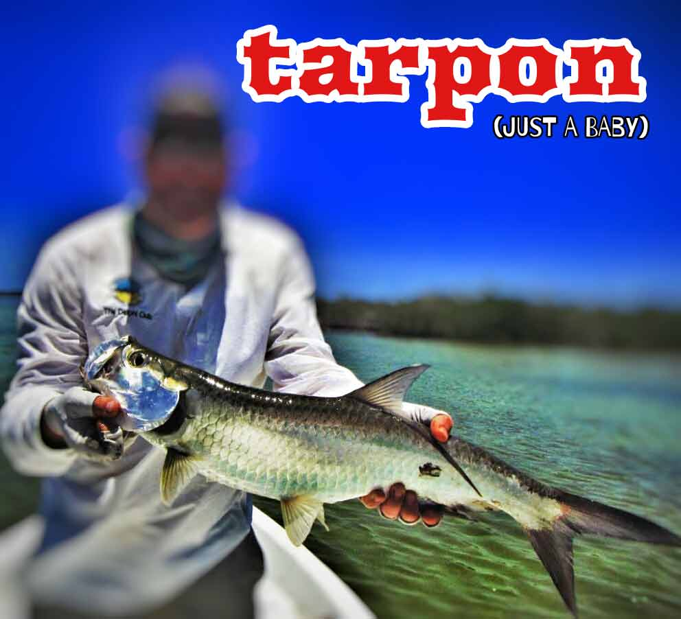 A tarpon that was caught while fly fishing near the Cozumel shoreline.