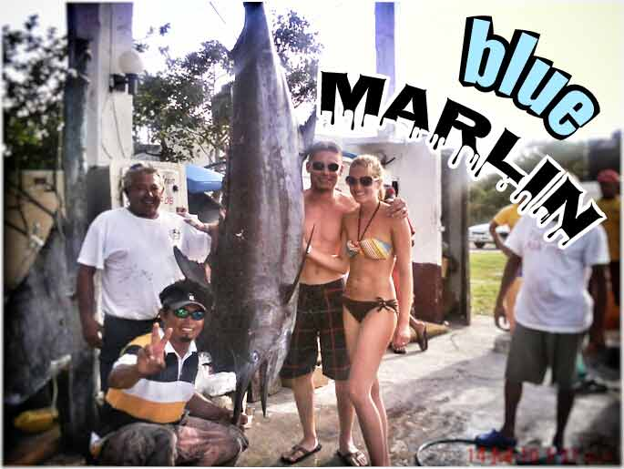 A large blue marlin that was caught during a deap sea fishing tour between Cozumel and Playa Del Carmen.