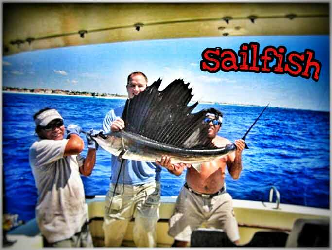 A small sailfish caught near the shore of Playa Del Carmen.