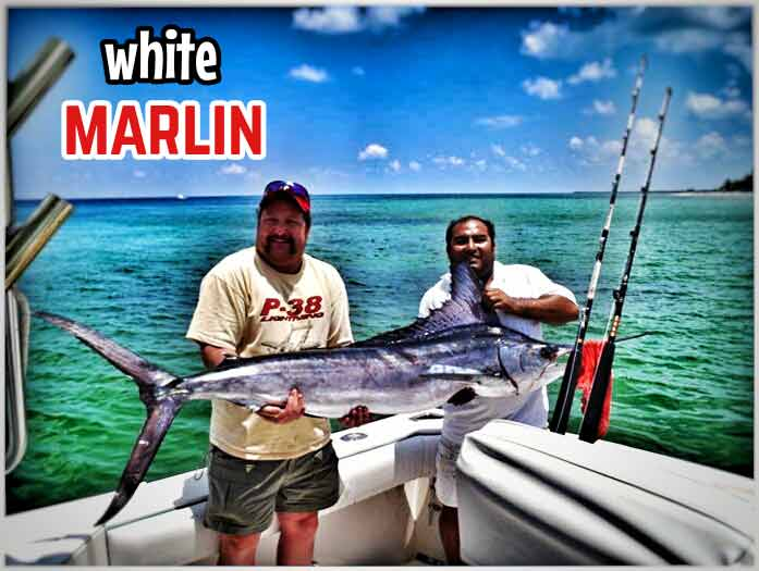 Two men holding a white marlin that was caught near Cozumel, Mexico.