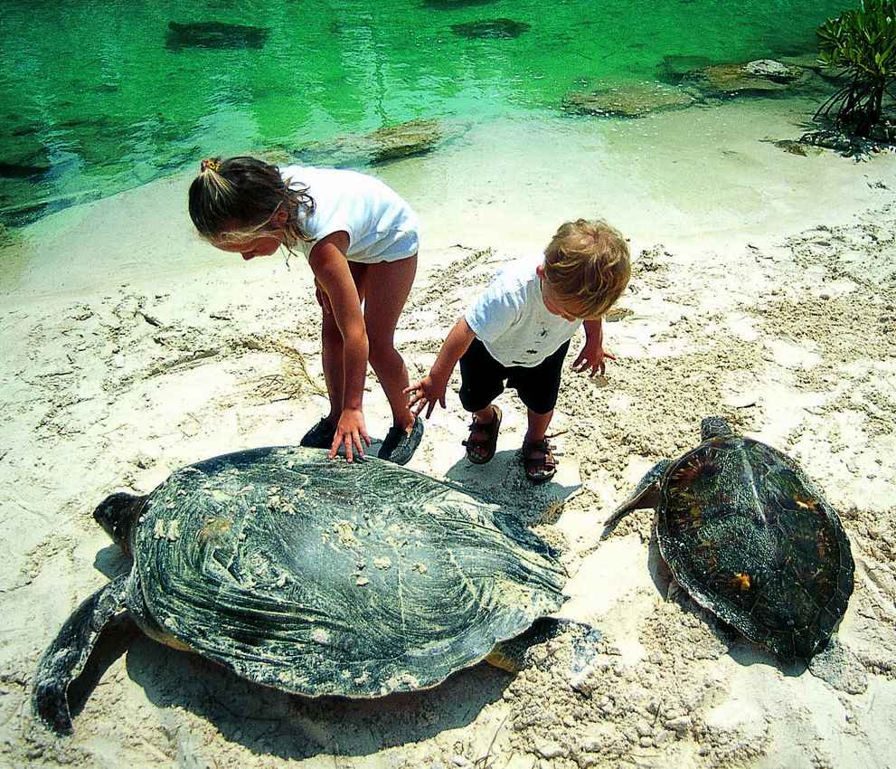 Two children playing with several large sea turtles at a beach.