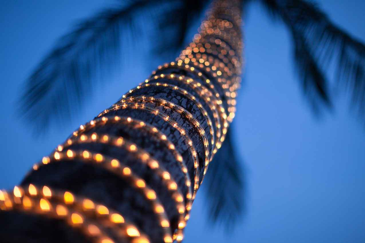 A palm tree covered with string lighting as seen at night.