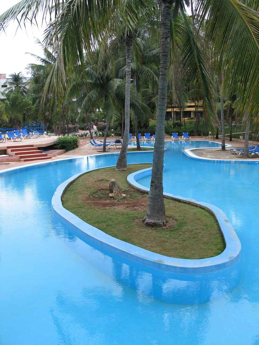 A large swimming pool with a palm tree island in the center.