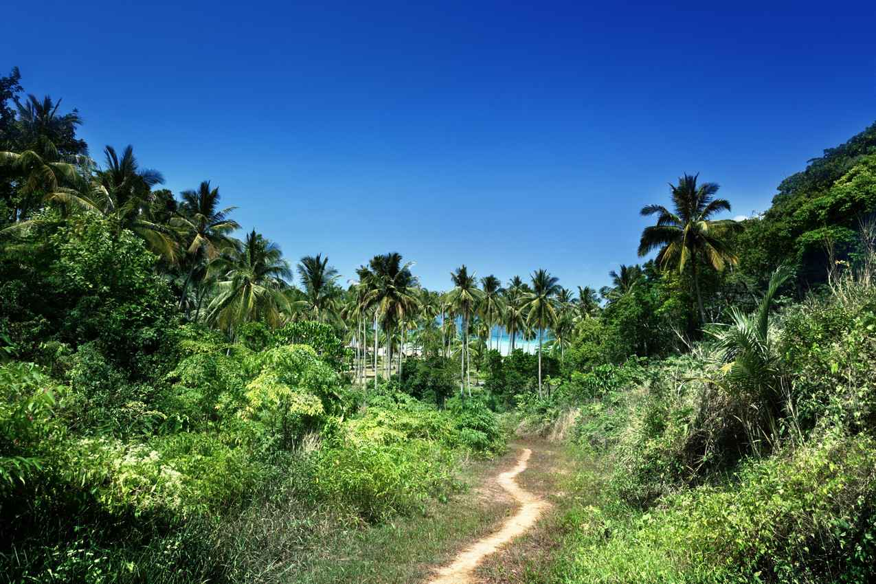 A trail that runs through the jungle leading to a secluded beach.