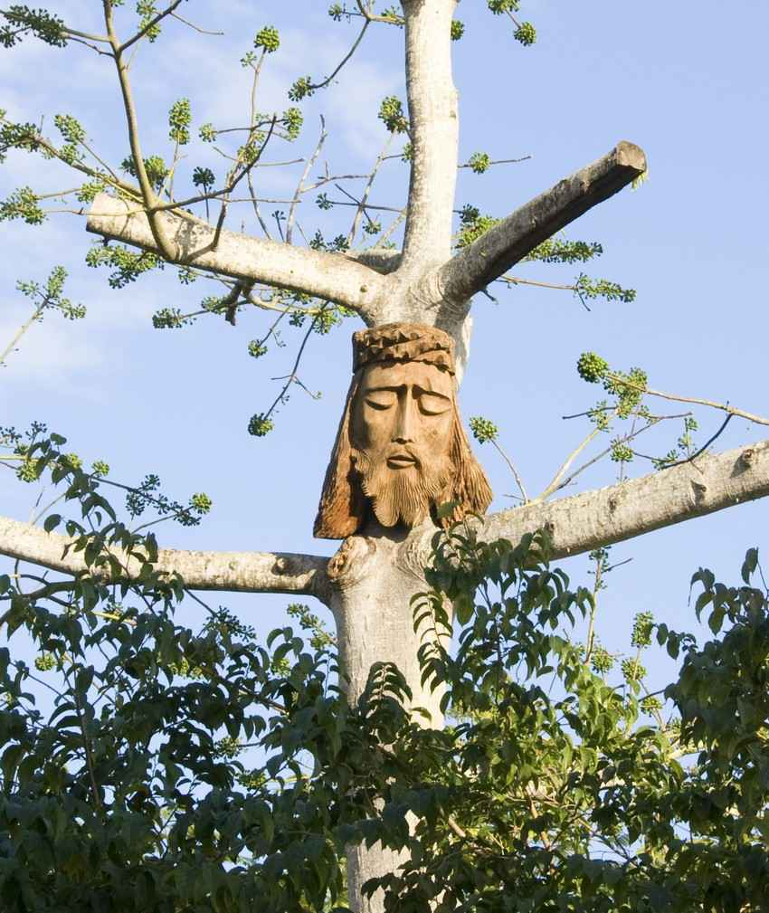 A tree in the jungle that looks like a cross with the carved face of Jesus Christ on it.