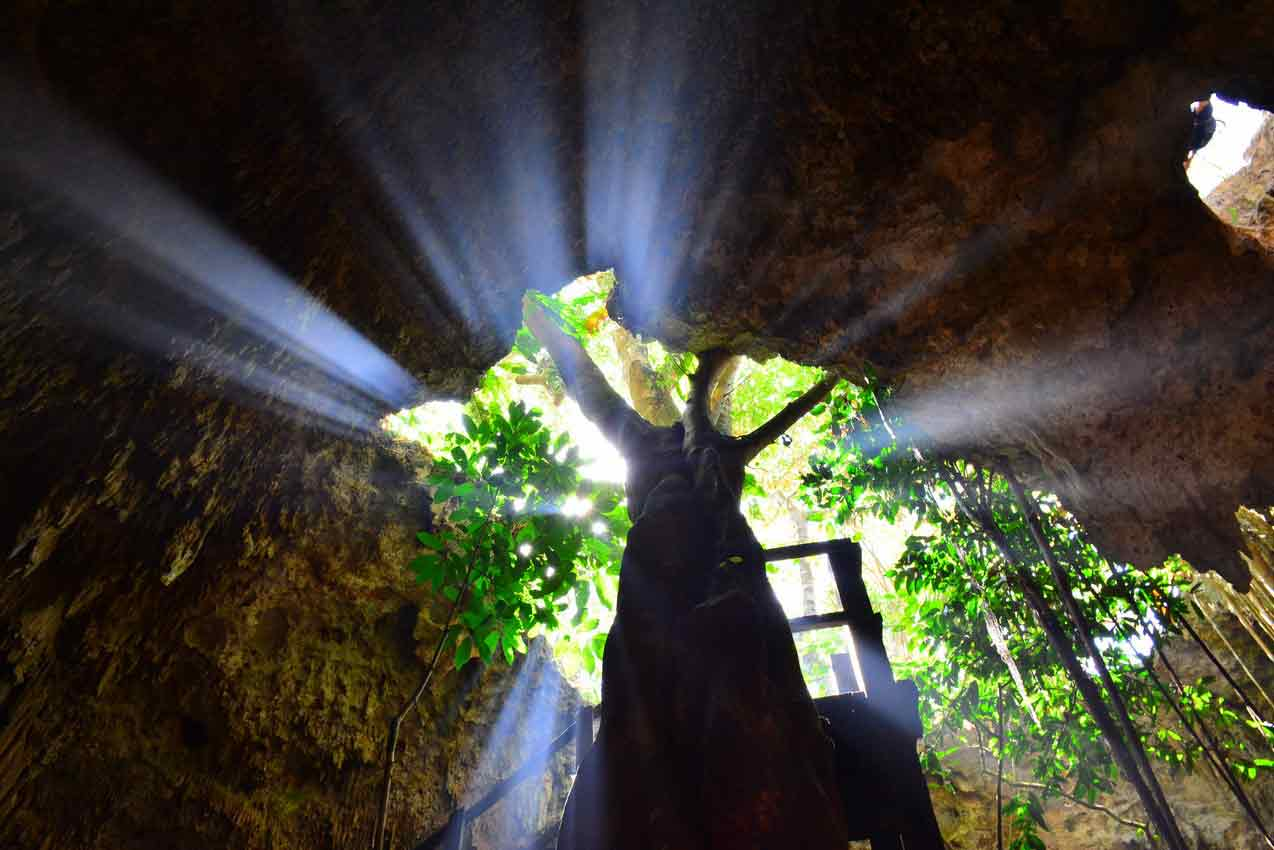 large-tree-growing-inside-of-cave-at-rio-secreto-reserve-park