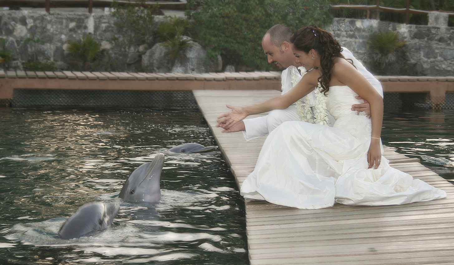 A recently married bride and groom playing with dolphins in the Riviera Maya.