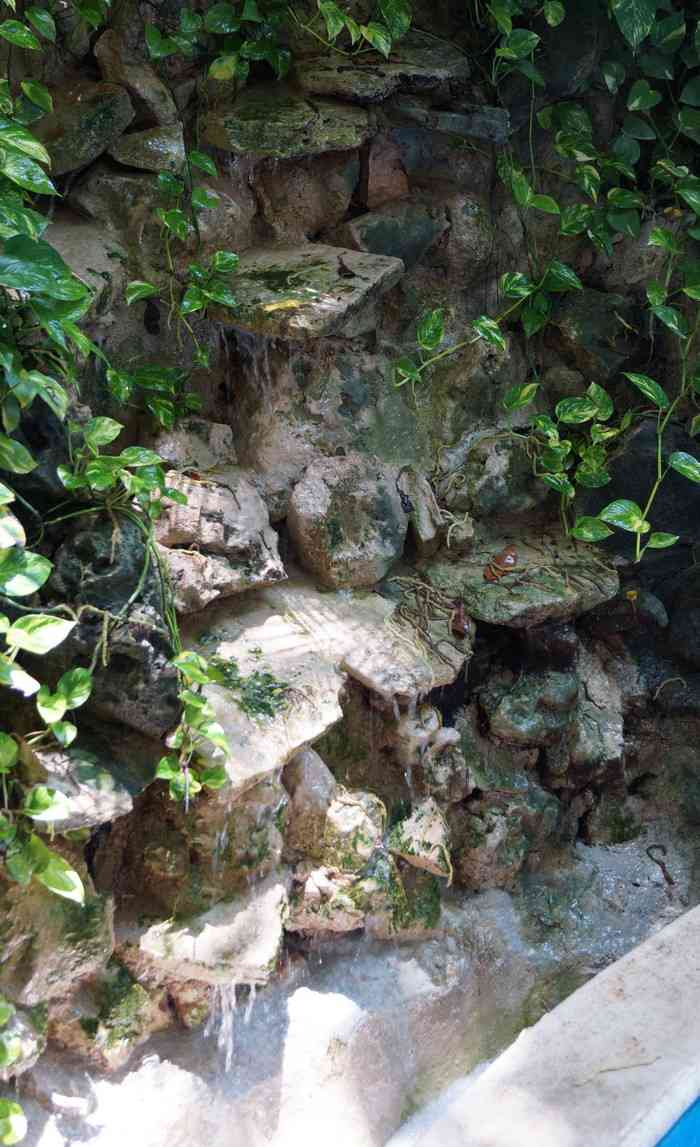 A small waterfall with lots of vegetation at the Luna Blue Hotel.