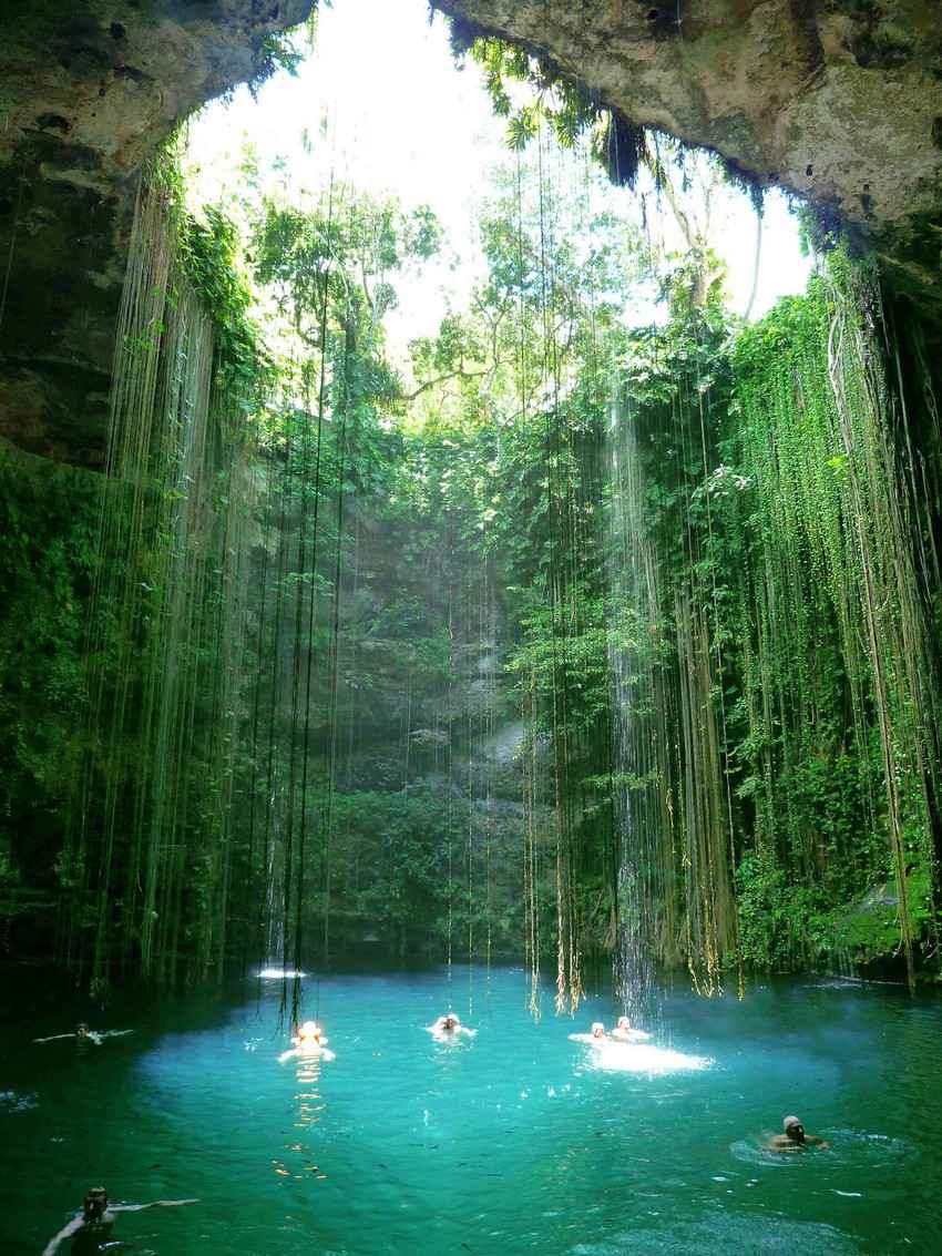The sun shining into a cenote through the jungle canopy.