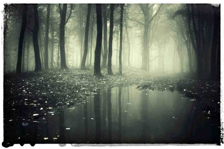 A very cold and dirty pool of water that is surrounded by a dark forest.