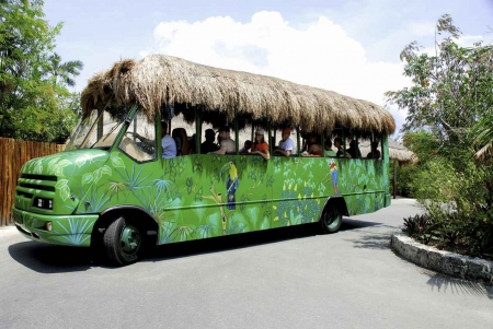 A tour bus featuring a palapa roof and jungle paintings on the side.
