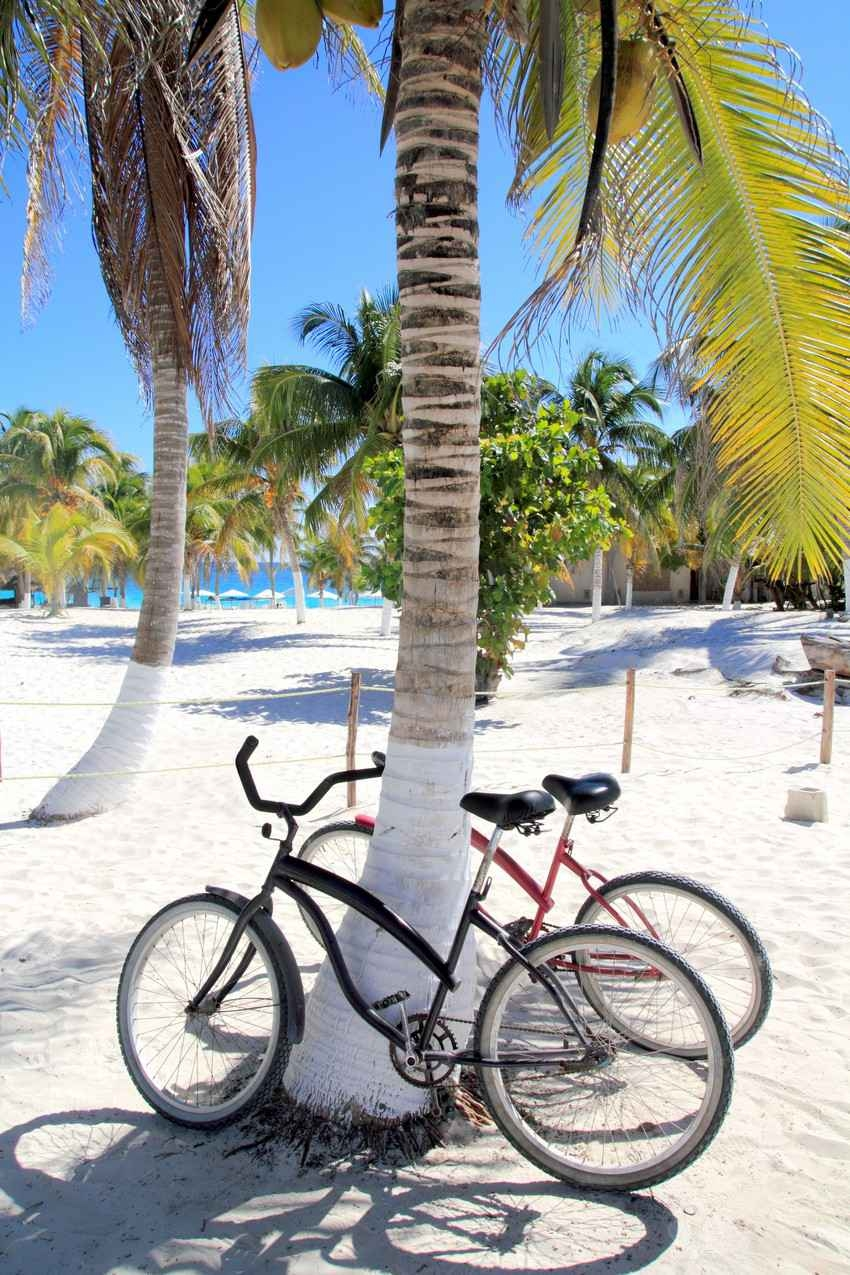 Two rental bikes attached to a tree near the beach.