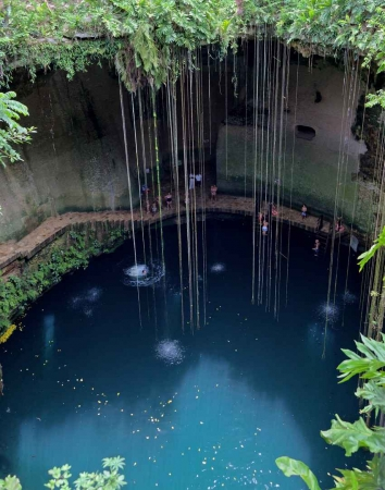 This is what you will see if you are looking into a cenote from the top.