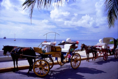Several horses pulling wagons on a street in Cozumel.