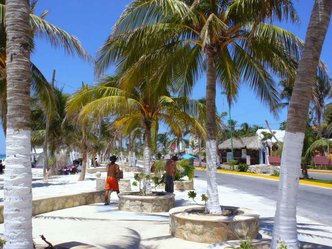 Several tropical trees and palapa roofs that are very common in downtown Playa Del Carmen.