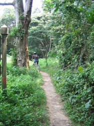 A man with a helmet riding a bike on a skinny jungle trail.