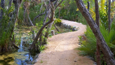 A jungle tour trail.