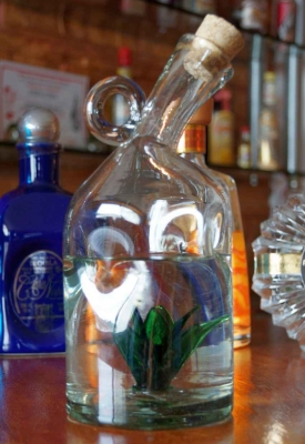 A bottle of Mexican tequila with a glass agave plant in the bottom.