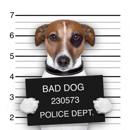 A bad dog being arrested and booked at the Police Department.