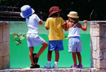 Three children watching baby turtles at a theme park.