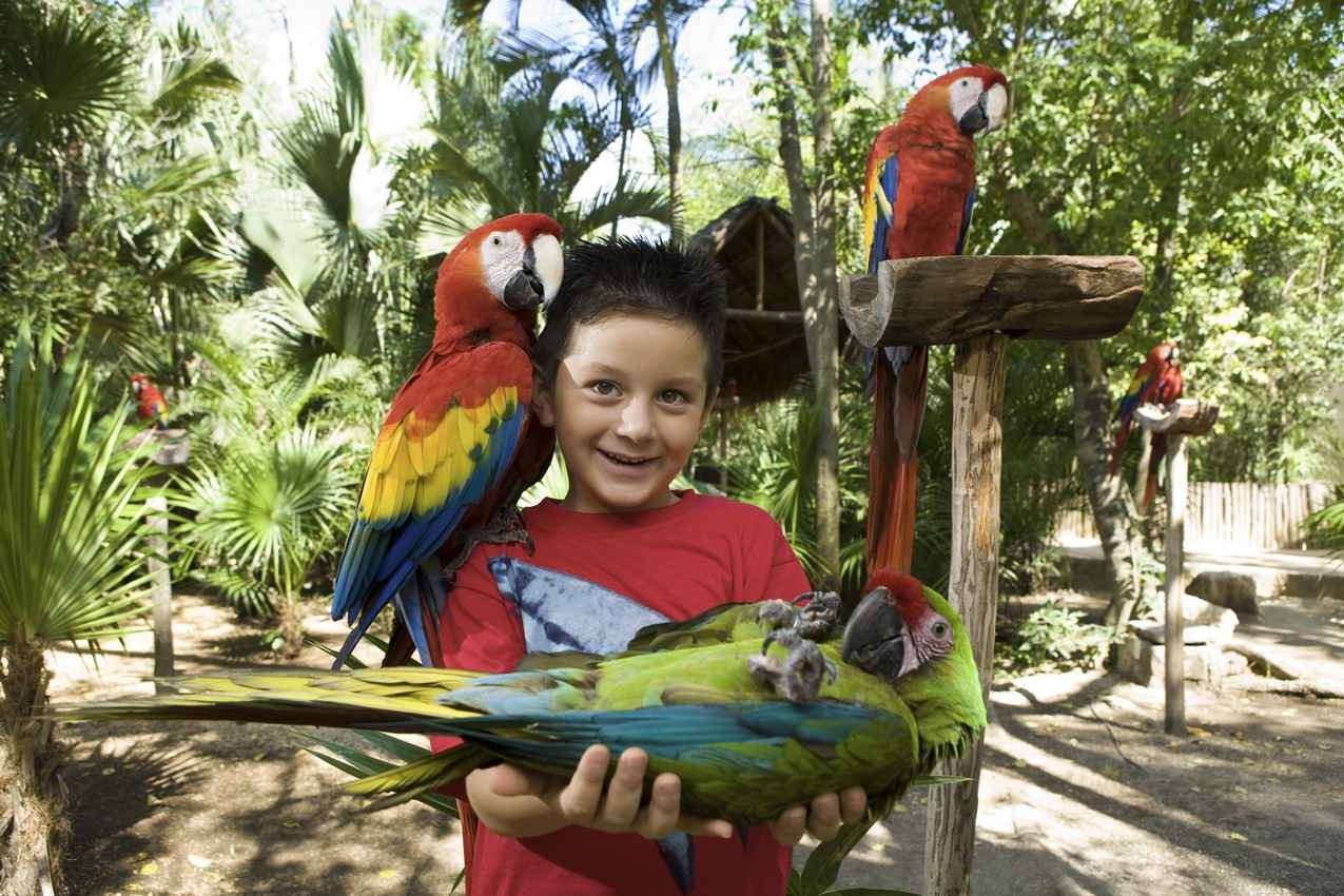 A young boy holding a parrot in his hands.