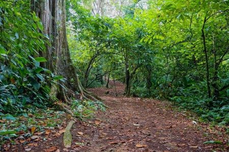 A trail running through the jungle.
