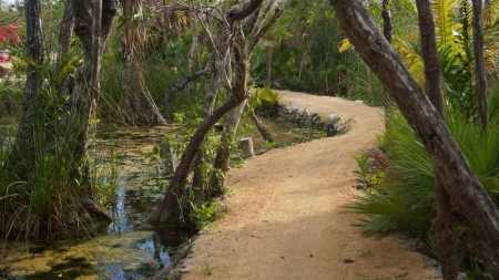 A walkway and bicycle trail that runs through the Playa Del Carmen jungle and swamps.