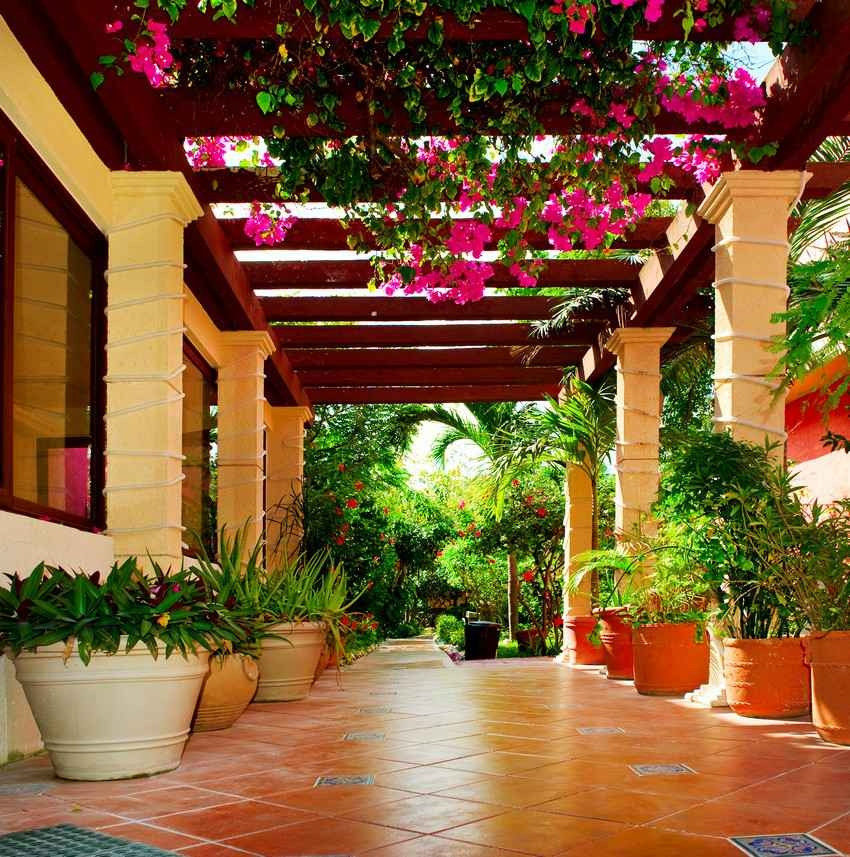 A bright and colorful walkway with many flowers and plants.