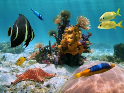 An example of the amazing snorkeling and diving near the shore of Cozumel Mexico.