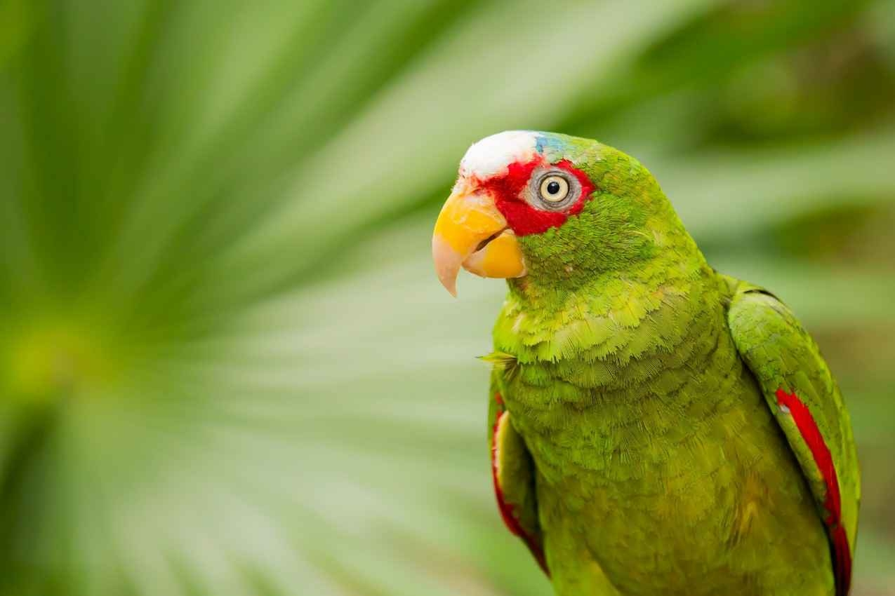 A wild parrot seen in the jungle during a Playa Del Carmen tour.