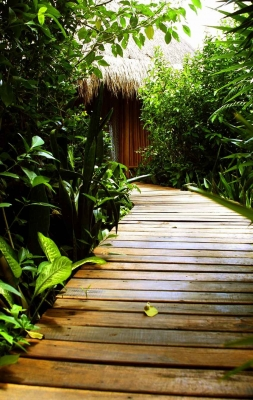 An extensive jungle trail covered with wooden planks.
