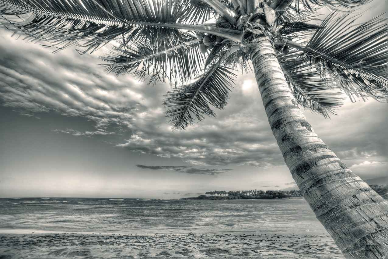 A palm tree and beach photograph near Playa Del Carmen that it is enhanced with black and white.