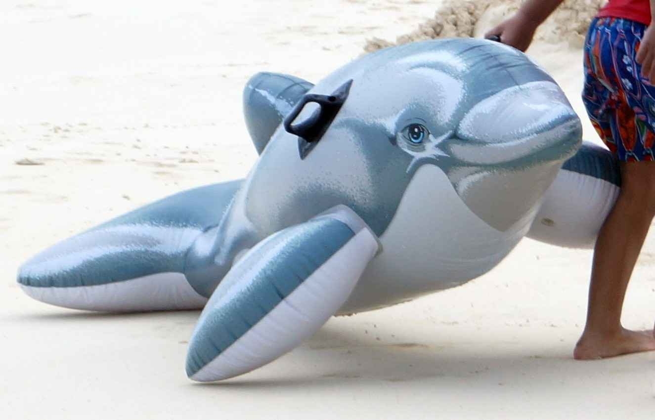 A dolphin-shaped floating device on the beach in Playa Del Carmen.