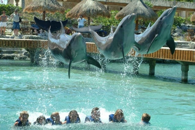 Three dolphins jumping over seven children who are swimming in a pool at Xcaret.
