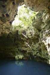 Two people repelling down from the jungle into a cenote near Playa Del Carmen.