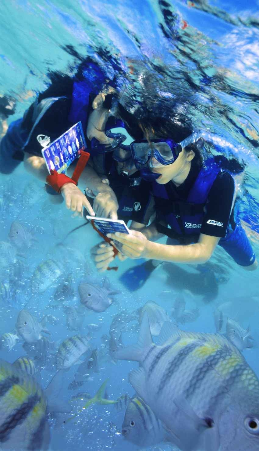 Several tourists snorkeling near Playa Del Carmen holding a waterproof underwater guide.
