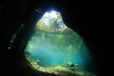 Looking out of a cenote at the sky from underwater.